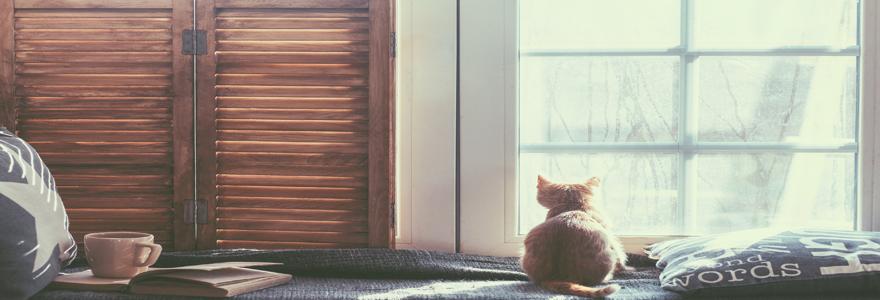 une pose de fenêtre en bois